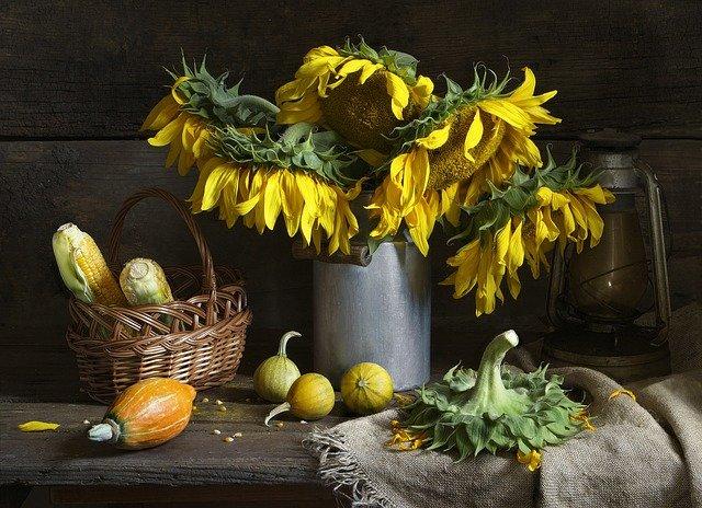 povadlé slunečnice